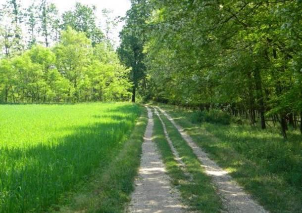 parco del ticino sentiero strona