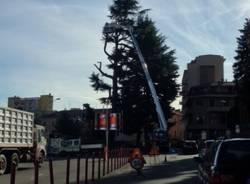 Abbattuto il cedro di Piazza Repubblica (inserita in galleria)