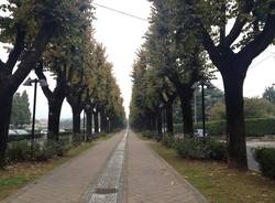 viale rimembranze cassano magnago autunno luoghi