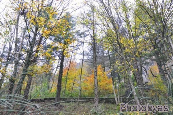 Colori d'autunno alla Rasa (inserita in galleria)