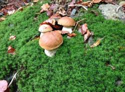 funghi ottobre 2013 (per gallerie fotografiche)