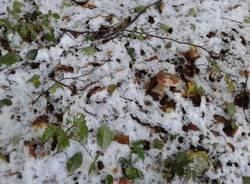 Funghi sotto la neve (inserita in galleria)