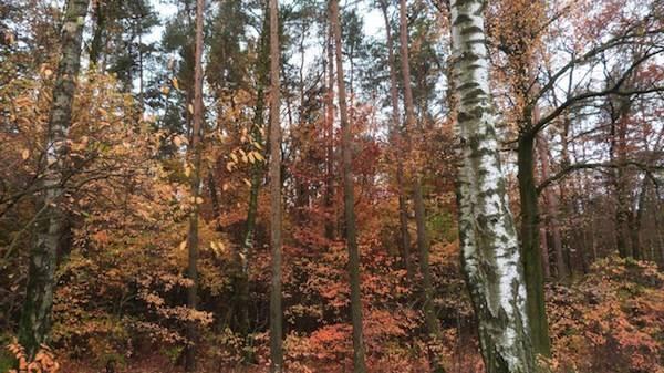 I colori dell'autunno  (inserita in galleria)
