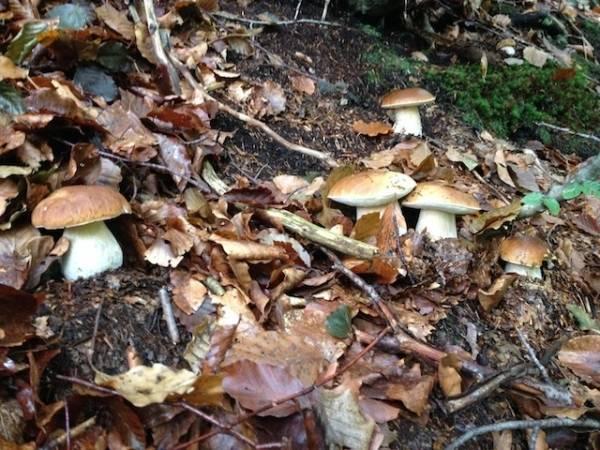 I lettori pazzi per i funghi (inserita in galleria)