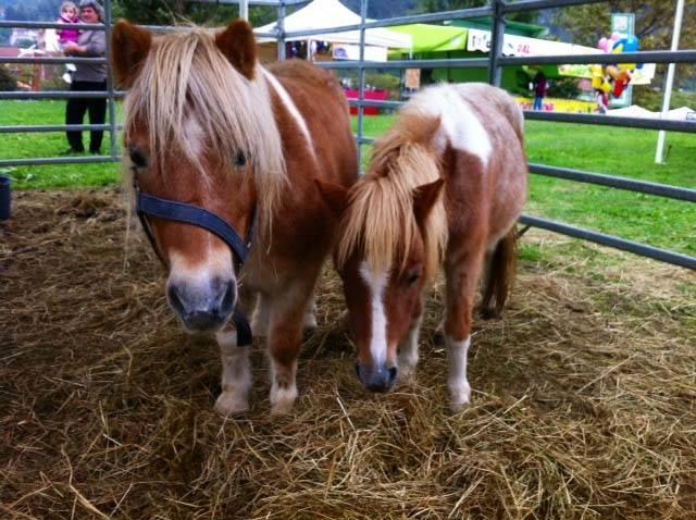 lago e cavalli 2013