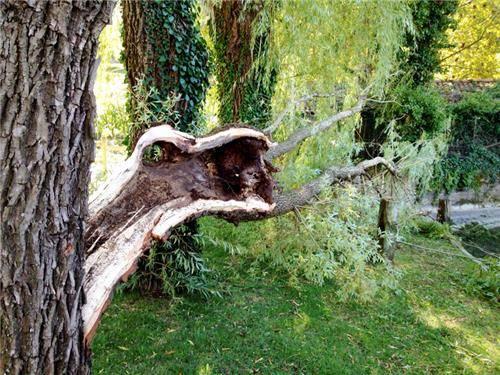 Maltempo, al lago di Cazzago caduti due salici (inserita in galleria)