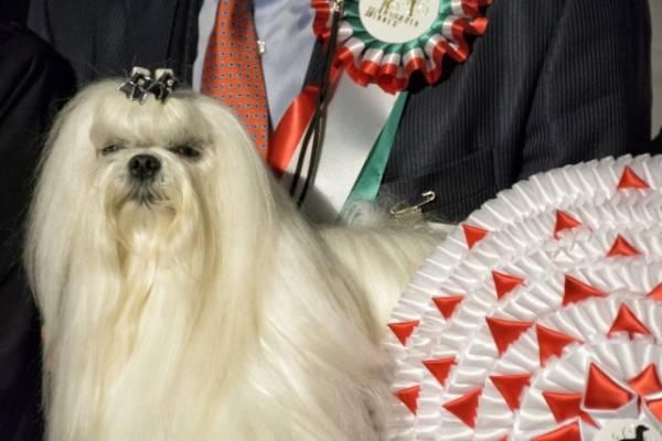 A Malpensa, la passerella canina (inserita in galleria)