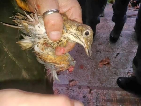 Gli uccellini maltrattati dal braconiere (inserita in galleria)