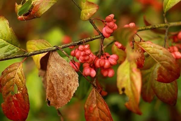 L'autunno dei lettori (inserita in galleria)