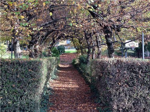 L'autunno nel parco di Villa Augusta (inserita in galleria)