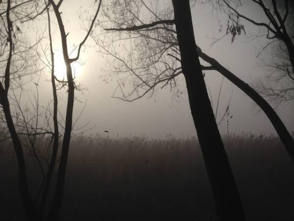 Canneto nella nebbia (inserita in galleria)