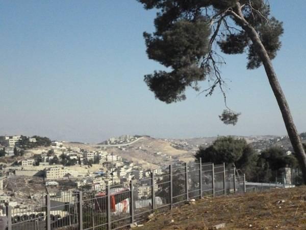 In Palestina, tra gli olivi e il Muro (inserita in galleria)