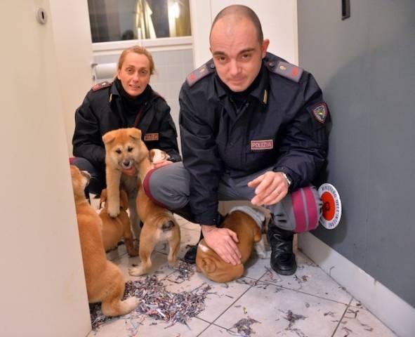 Tredici cuccioli di razza imprigionati nel bagagliaio dell'auto (inserita in galleria)
