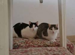 Gatti adulti che cercano casa (inserita in galleria)