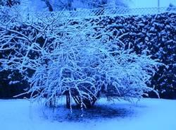 neve marchirolo 2014