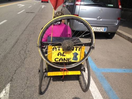 Un cane in bicicletta (inserita in galleria)