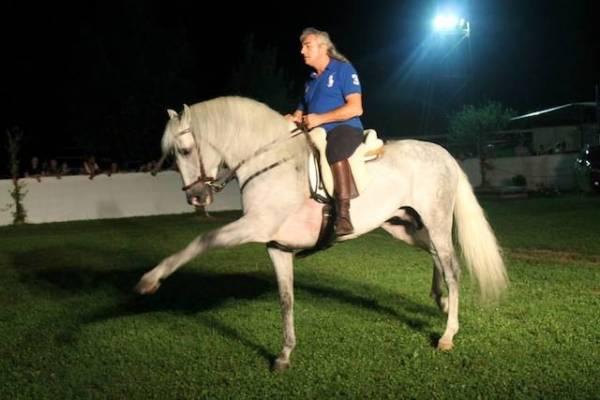 Cavalli arabi a Villa Inzoli (inserita in galleria)
