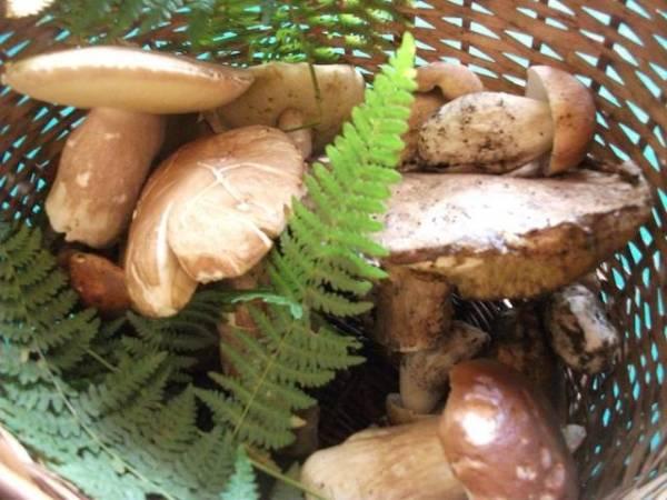 L'estate dei funghetti (inserita in galleria)