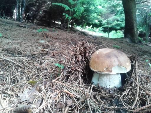 E' già tempo di funghi (inserita in galleria)