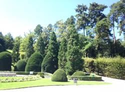 I cipressi del Giardini Estensi (inserita in galleria)