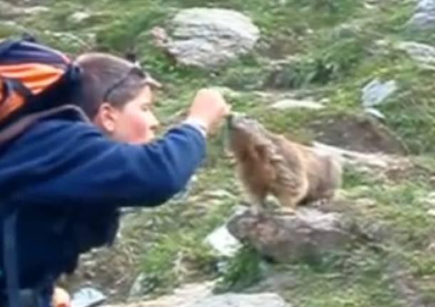 Marmotta golosa