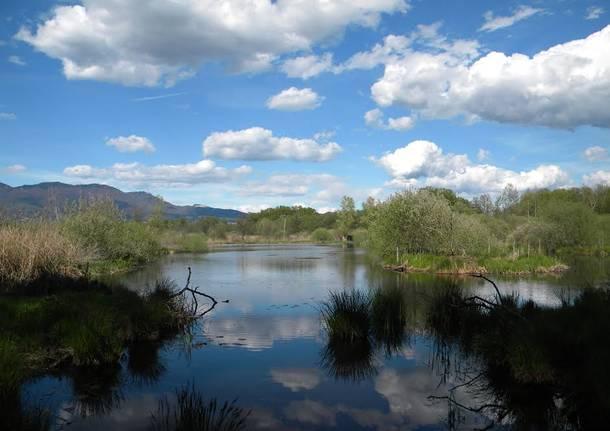 palude brabbia veduta lago di varese