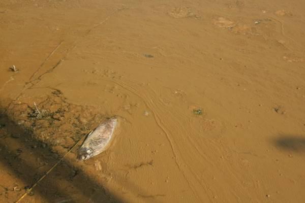 Tanfo e pesci morti nel lago di Varese (inserita in galleria)