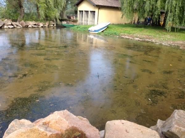 Un pomeriggio sul lago a Cazzago Brabbia (inserita in galleria)