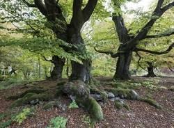 foresta vergine foto