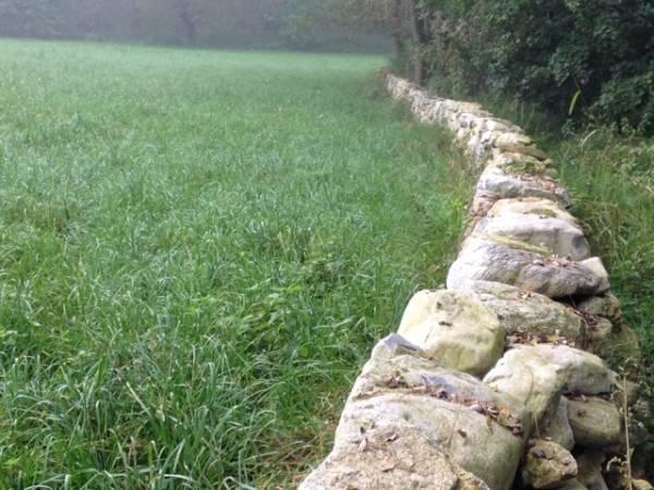 Muri a secco, stagno e lotta alla Ludwigia (inserita in galleria)
