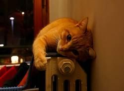 Riscaldamento acceso, gatto termosifone