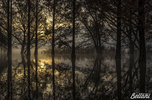 Alba tra gli alberi allagati dalle acque del Lago