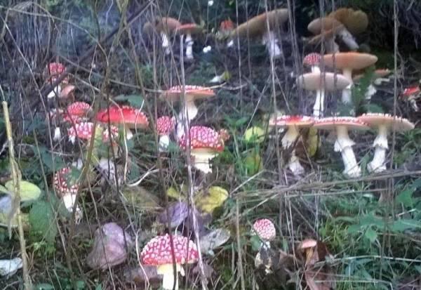 Dopo la pioggia, funghi per tutti (inserita in galleria)