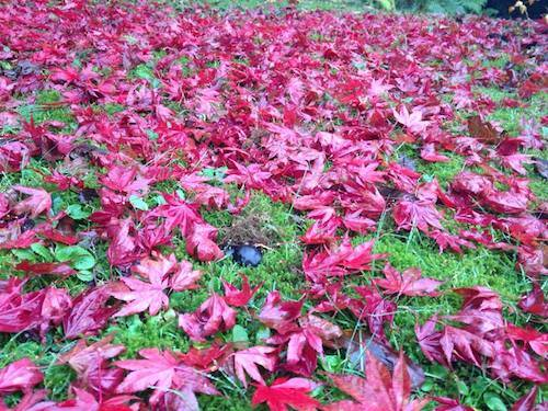 Prati fioriti d'autunno