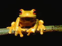 rana biodiversita