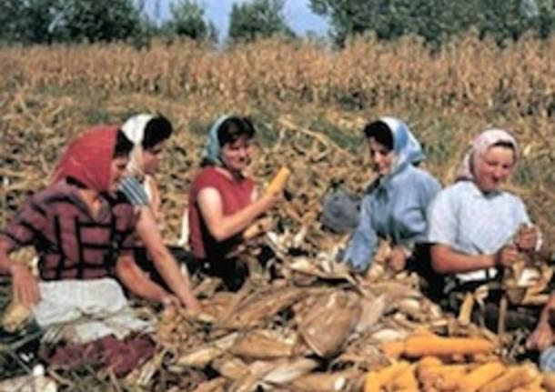 mais granoturco contadini contadine apertura