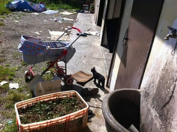 Un cane e due gatti abbandonati (inserita in galleria)