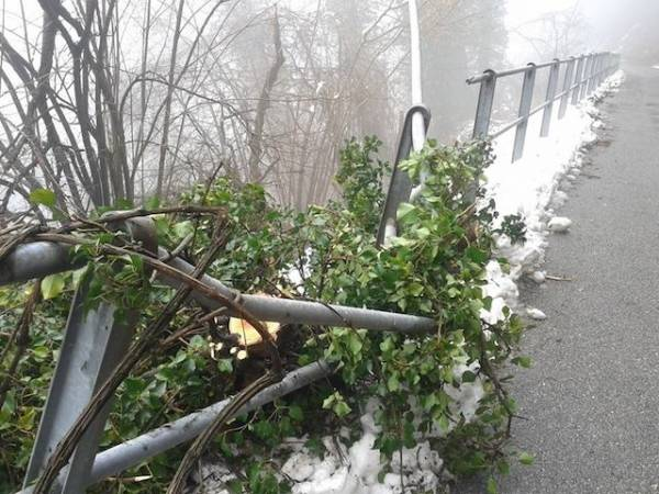 Arcumeggia, piante cadute per la neve (inserita in galleria)