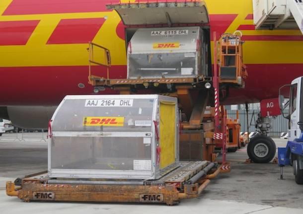 DHL a Malpensa (inserita in galleria)