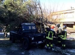 Forte vento, albero cade su un'auto (inserita in galleria)