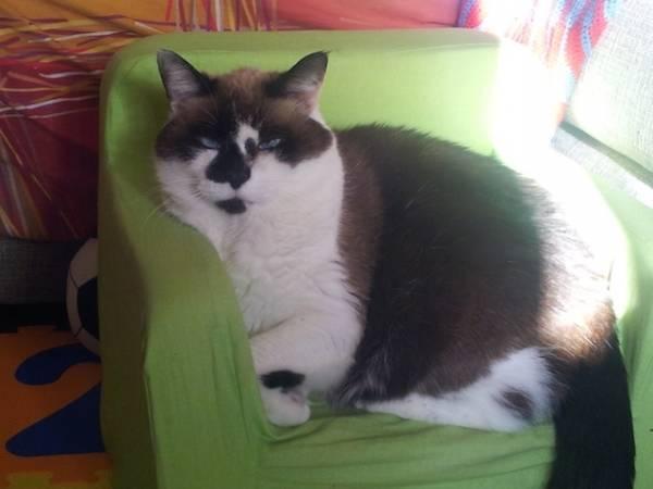 I vostri gatti 10 (inserita in galleria)