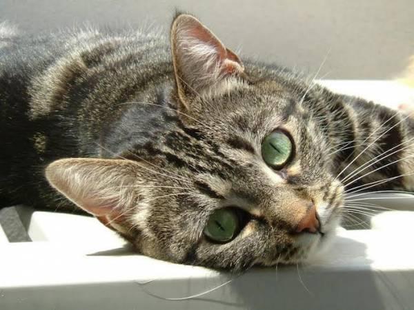 I vostri gatti 3 (inserita in galleria)