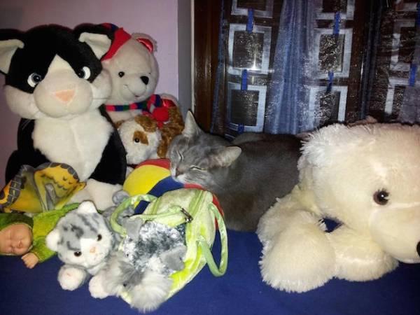 I vostri gatti 5 (inserita in galleria)