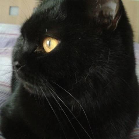 I vostri gatti 6 (inserita in galleria)