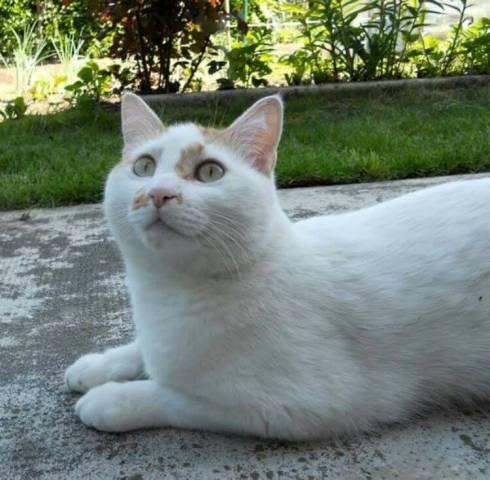 I vostri gatti 7 (inserita in galleria)