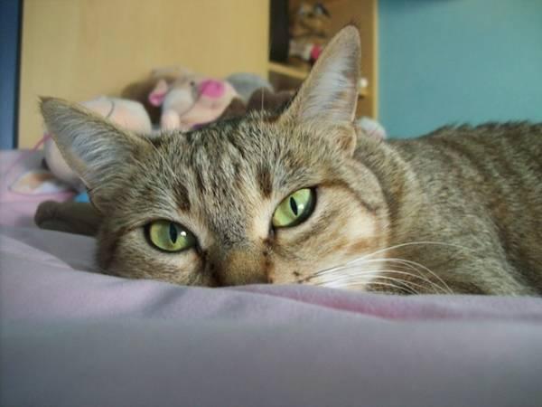 I vostri gatti 8 (inserita in galleria)