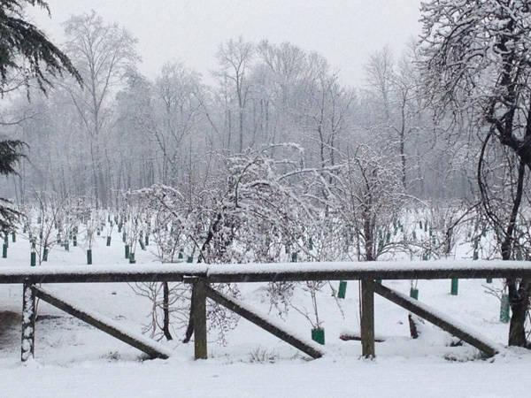La neve a Busto Arsizio e in Valle Olona (inserita in galleria)