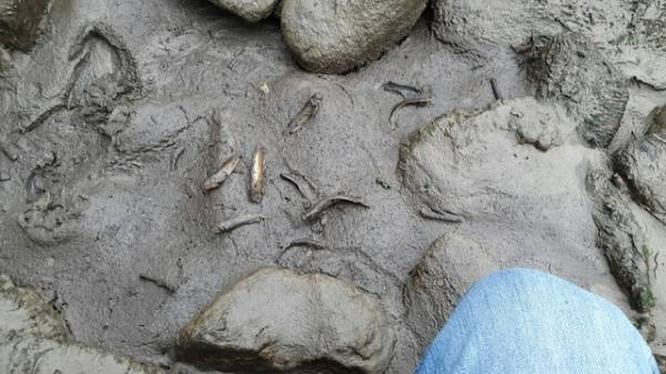 Pesci morti sul Tresa (inserita in galleria)