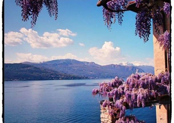 Il glicine in fiore a Santa Caterina del Sasso