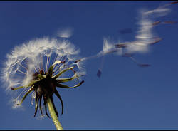 meteo vento protezione civile